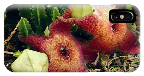 Closeup Of A Desert Starfish IPhone Case