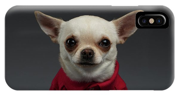 Closeup Portrait Chihuahua Dog In Stylish Clothes. Gray Background IPhone Case