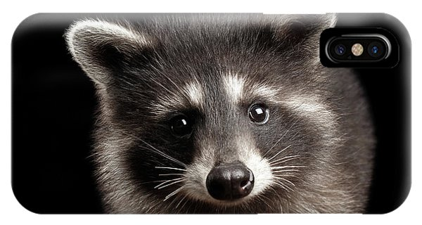 Closeup Portrait Cute Baby Raccoon Isolated On Black Background IPhone Case