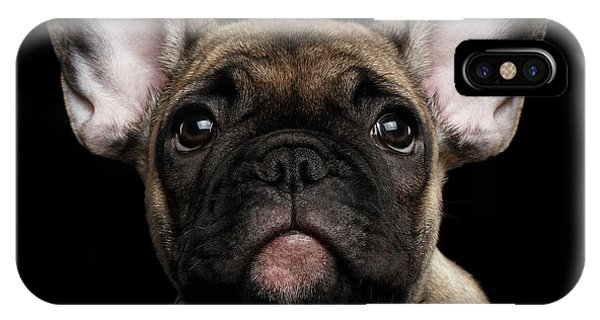 Closeup Portrait French Bulldog Puppy, Cute Looking In Camera IPhone Case