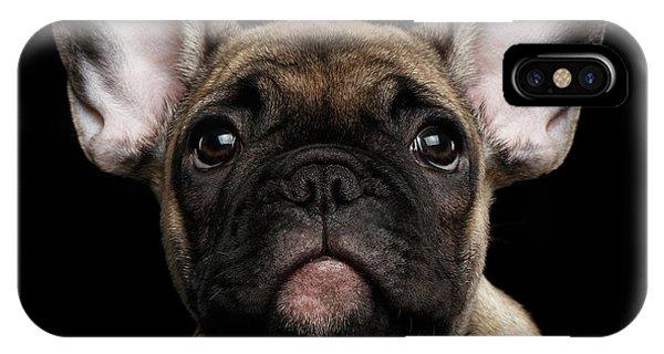 Closeup Portrait French Bulldog Puppy, Cute Looking In Camera IPhone Case