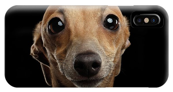 Closeup Portrait Italian Greyhound Dog Looking In Camera Isolated Black IPhone Case