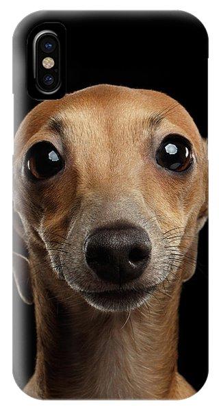 Dog iPhone X / XS Case - Closeup Portrait Italian Greyhound Dog Looking In Camera Isolated Black by Sergey Taran