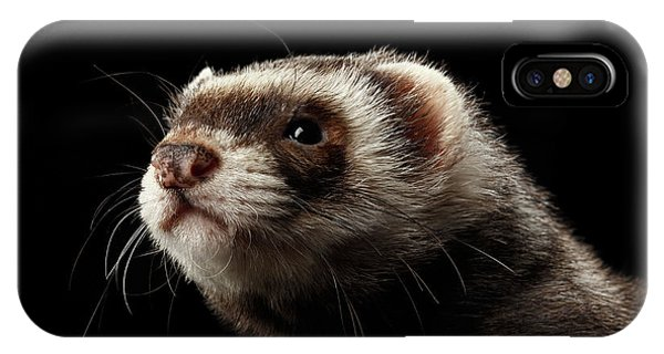 Closeup Portrait Of Funny Ferret Looking At The Camera Isolated On Black Background, Front View IPhone Case