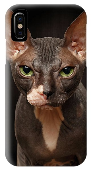Cat iPhone X Case - Closeup Portrait Of Grumpy Sphynx Cat Front View On Black  by Sergey Taran