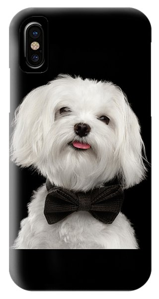 Closeup Portrait Of Happy White Maltese Dog With Bow Looking In Camera Isolated On Black Background IPhone Case