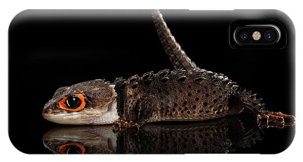 Closeup Red-eyed Crocodile Skink, Tribolonotus Gracilis, Isolated On Black Background IPhone Case