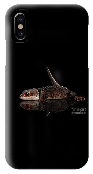Closeup Red-eyed Crocodile Skink, Tribolonotus Gracilis, Isolated On Black Background IPhone Case