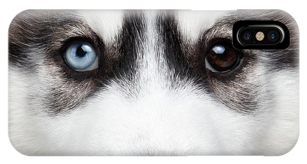 Closeup Siberian Husky Puppy Different Eyes IPhone Case