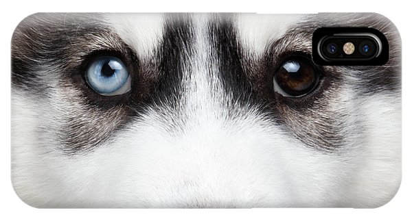 Dog iPhone X Case - Closeup Siberian Husky Puppy Different Eyes by Sergey Taran