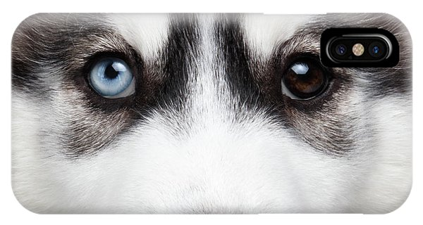 Dog iPhone X Case - Closeup Siberian Husky Puppy Different Eyes by Sergey Taran