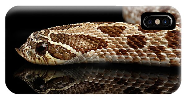 Closeup Western Hognose Snake, Isolated On Black Background IPhone Case