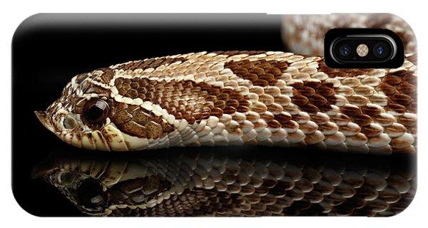 Closeup Western Hognose Snake, Isolated On Black Background IPhone Case