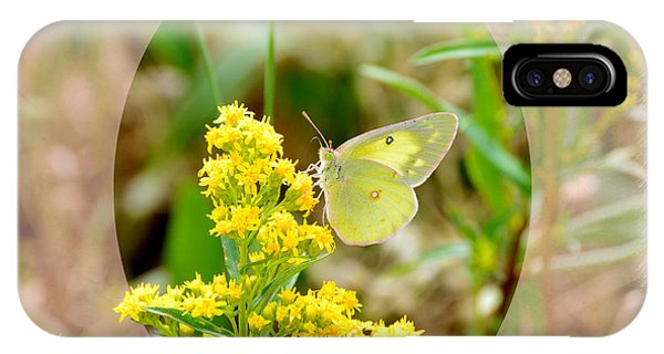 Clouded Sulphur Butterfly Sipping Nectar IPhone Case