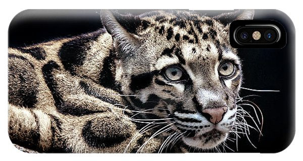 IPhone Case featuring the photograph Clouded Leopard by David Millenheft