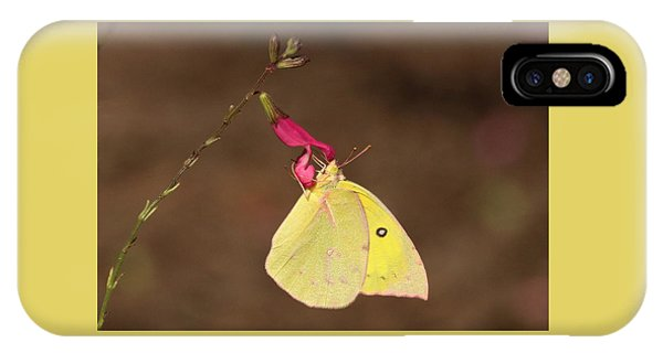 Clouded Sulphur Butterfly On Pink Wildflower IPhone Case