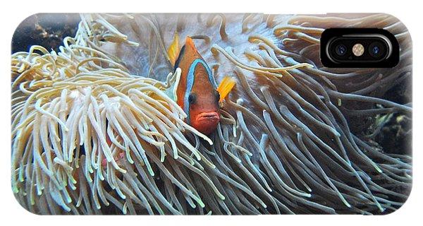 Clown Fish IPhone Case