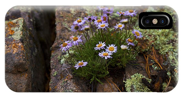 Clump Of Asters IPhone Case