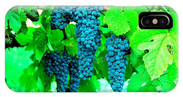 Cluster Of Wine Grapes IPhone Case