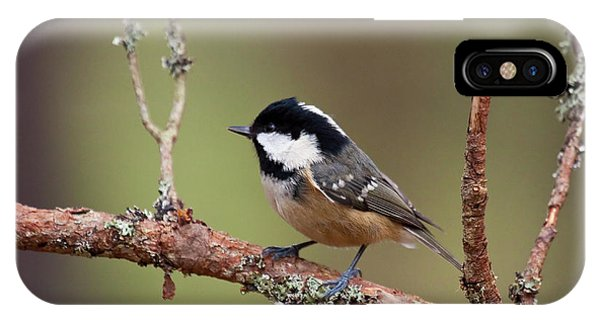Coal Tit Periparus Ater IPhone Case