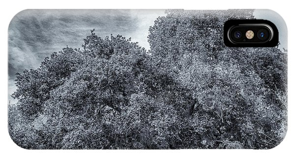 Coast Live Oak Monochrome IPhone Case