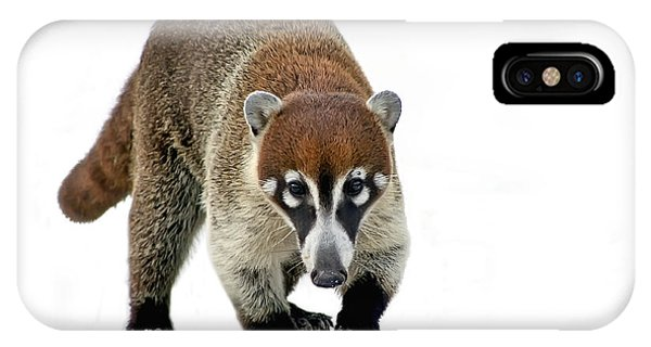 Coatimundi IPhone Case
