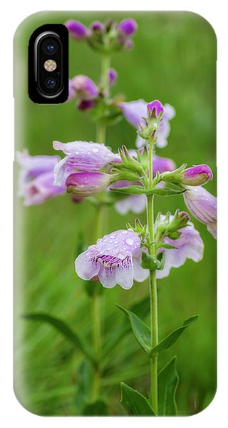 Cobea After Rain IPhone Case