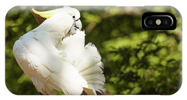 Cockatoo Preaning IPhone Case