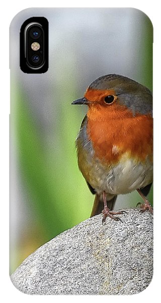 Cocky Robin IPhone Case