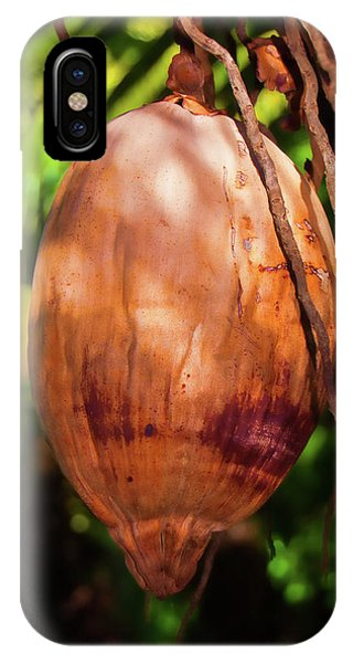 Coconut 2 IPhone Case