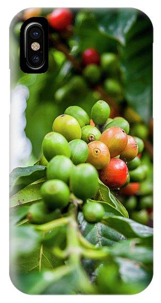 Coffee Plant IPhone Case