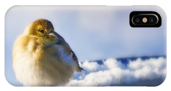 Cold American Goldfinch IPhone Case