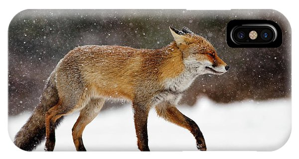 Cold As Ice - Red Fox In A Snow Blizzard IPhone Case