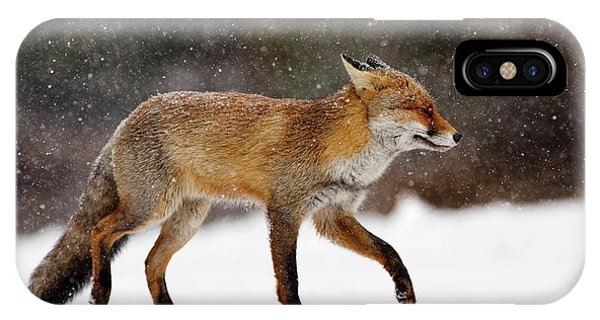 Winter iPhone Case - Cold As Ice - Red Fox In A Snow Blizzard by Roeselien Raimond