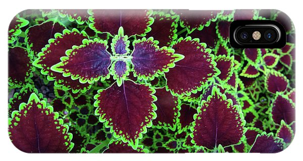 Coleus Leaves IPhone Case