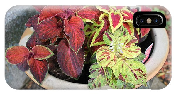 Coleus IPhone Case