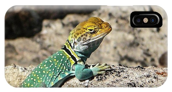 Collared Lizard IPhone Case