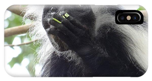 Exploramum iPhone Case - Colobus Monkey Eating Leaves In A Tree 2 by Exploramum Exploramum