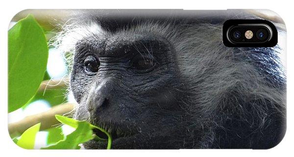 Exploramum iPhone Case - Colobus Monkey Eating Leaves In A Tree Close Up by Exploramum Exploramum