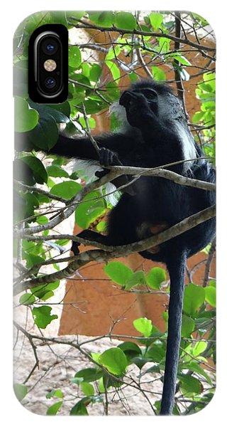 Exploramum iPhone Case - Colobus Monkey Eating Leaves In A Tree - Full Body by Exploramum Exploramum