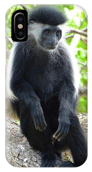 Exploramum iPhone Case - Colobus Monkey Sitting In A Tree 2 by Exploramum Exploramum
