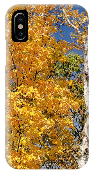 Color In The Trees IPhone Case