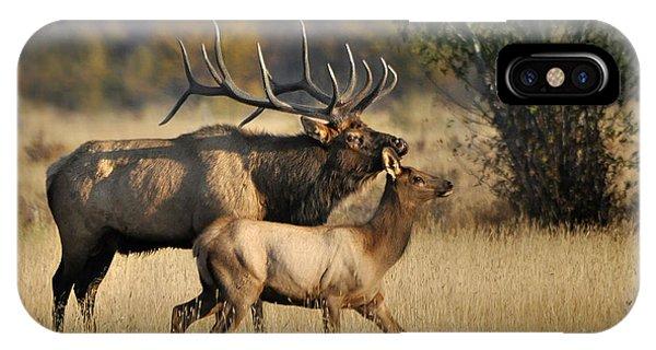 Colorado Elk  IPhone Case
