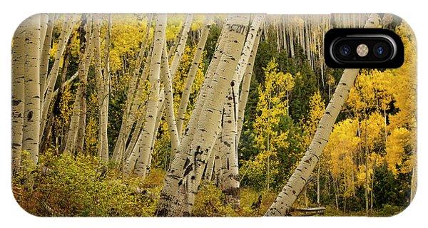 Colorado Fall Aspen Grove IPhone Case