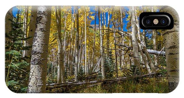 Colorado Fall Hike In The Aspens IPhone Case