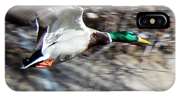 Colorado Mallard In Flight IPhone Case