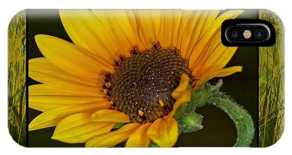 Colorado Sunflower IPhone Case