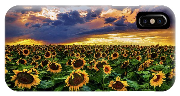 Colorado Sunflowers At Sunset IPhone Case