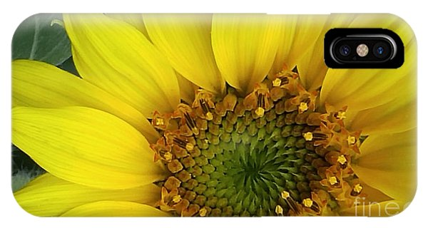 Colorado Wildflower Sunshine  IPhone Case