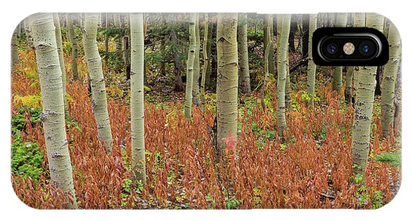 Colorful Aspen Forest Floor IPhone Case